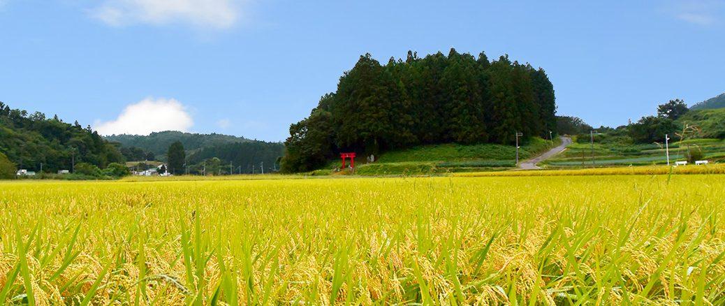 仙台坪沼収穫の秋